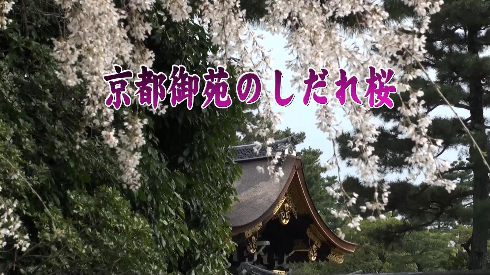 Kyotogyonenmp4_000001867